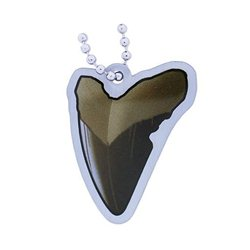 Earthcache Fossil Tag - Tooth